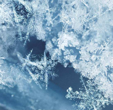 雪与树之禅韵